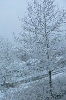 Portland_snow
